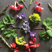 Kidzone (Virtual): Making Art with Plants